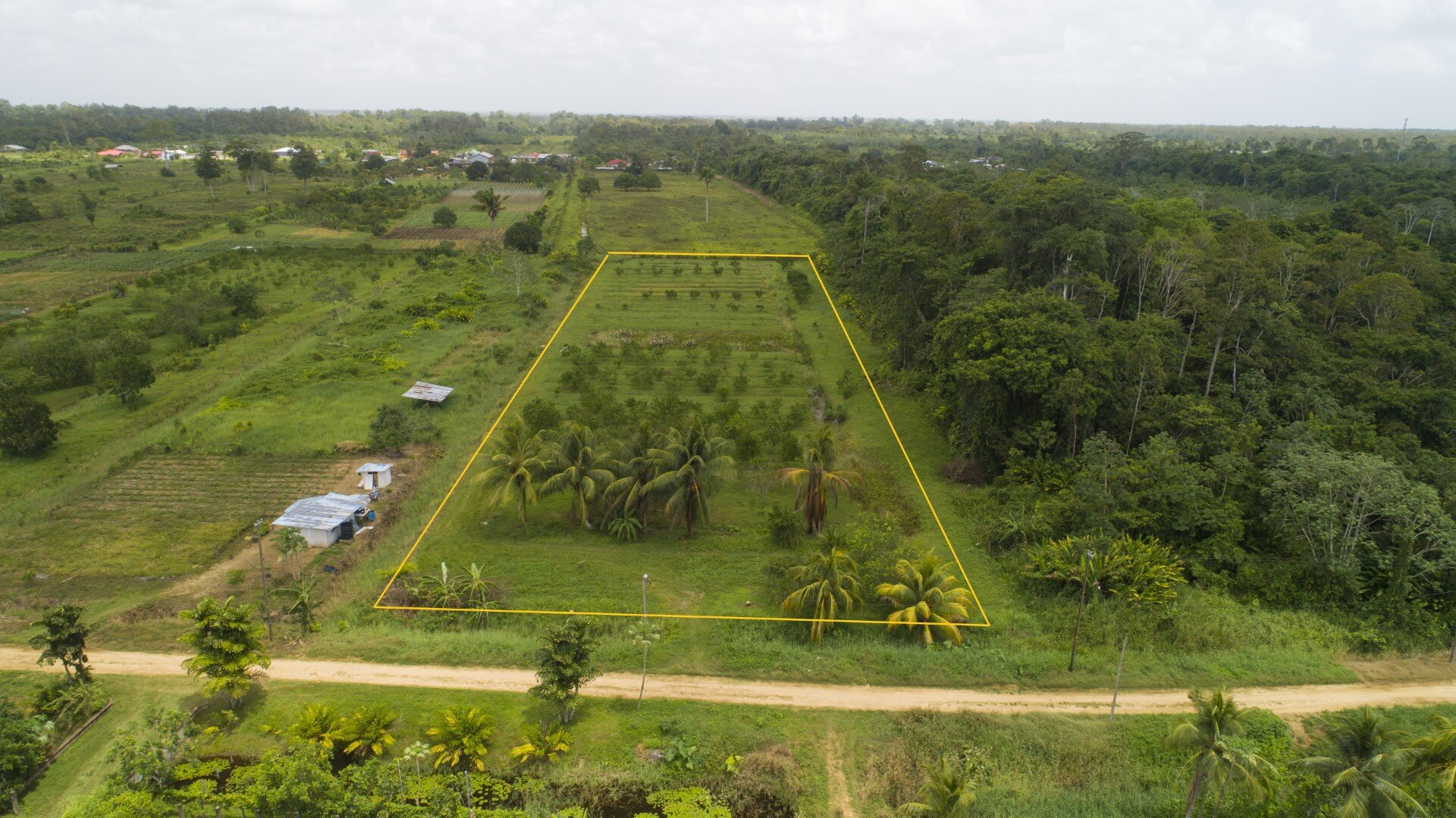 Colaproject perc. 145, nabij Tijgerkreek Westweg - 1 ha. citrusplantage te Saramacca - Surgoed Makelaardij NV - Paramaribo, Suriname